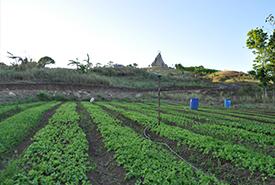 organic garden @ RICA1